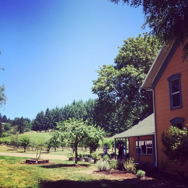 Vineyard Tour and Tasting