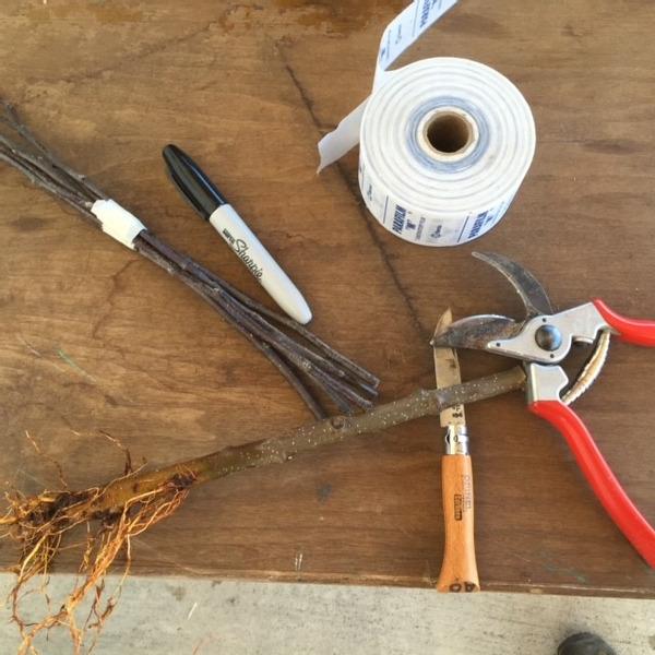 Grafting Workshop