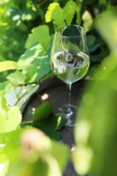 Messina Hof Wine Glass