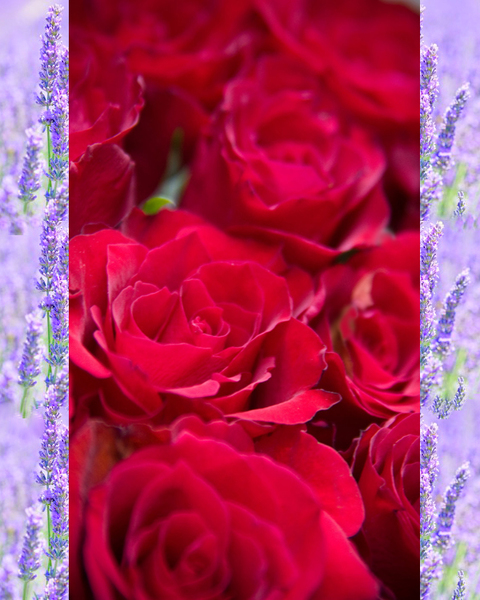 Product Image for RoseHybiscus/Lavender Flower Wine Quartet